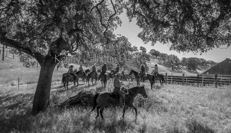 YL&C Bobcat Ranch 5-19-2018--9