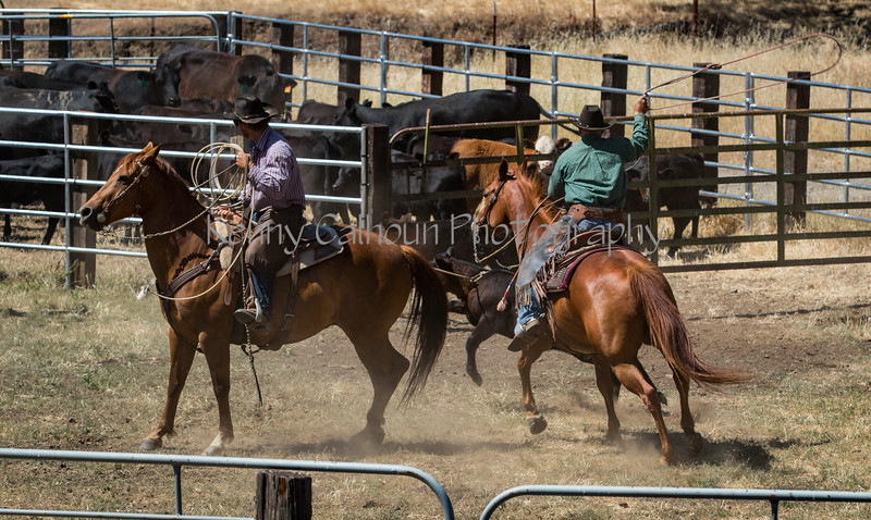 YL&C Bobcat Ranch 5-19-2018-7415