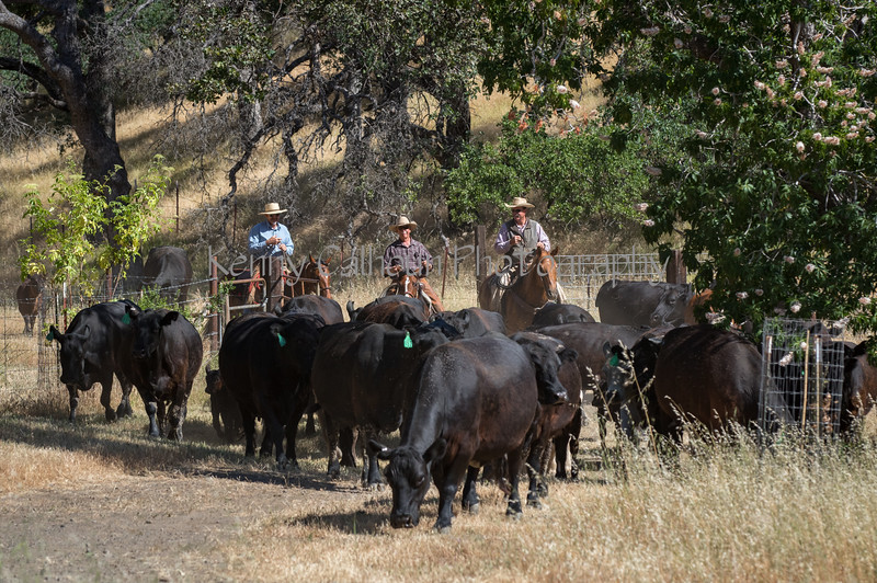 YL&C Bobcat Ranch 5-19-2018-6940