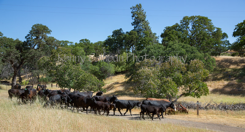YL&C Bobcat Ranch 5-19-2018-7443