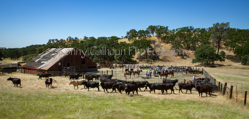 YL&C Bobcat Ranch 5-19-2018-7761
