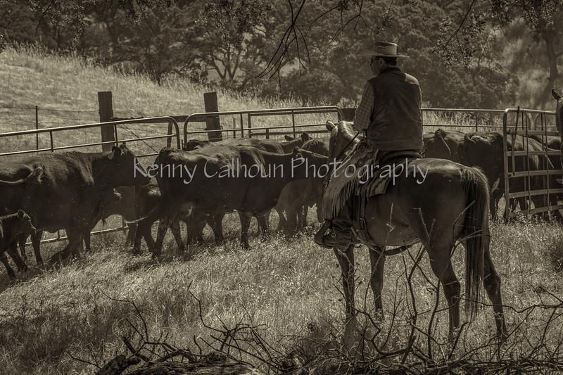 YL&C Bobcat Ranch 5-19-2018--5