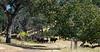 YL&C Bobcat Ranch 5-19-2018-7395