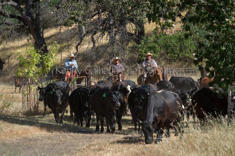 YL&C Bobcat Ranch 5-19-2018-6937