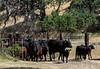 YL&C Bobcat Ranch 5-19-2018-6906