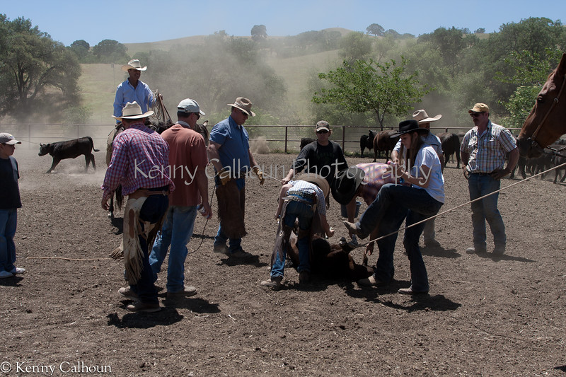 Yolo_Land_&_Cattle_May_20,_2012_(60_of_65)