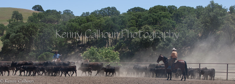 Yolo_Land_&_Cattle_May_20,_2012_(62_of_65)