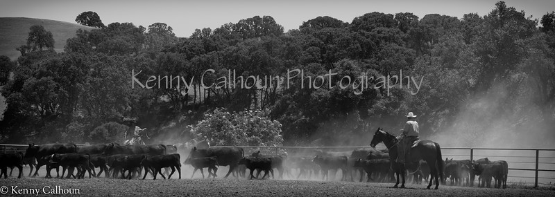 Yolo_Land_&_Cattle_May_20,_2012_(61_of_65)