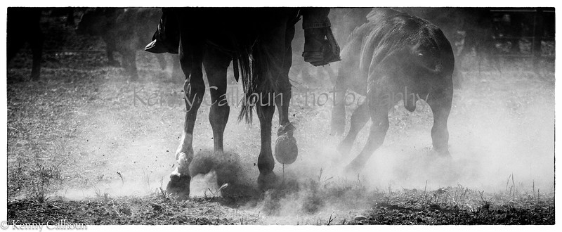 Yolo_Land_&_Cattle_May_20,_2012_(7_of_65)
