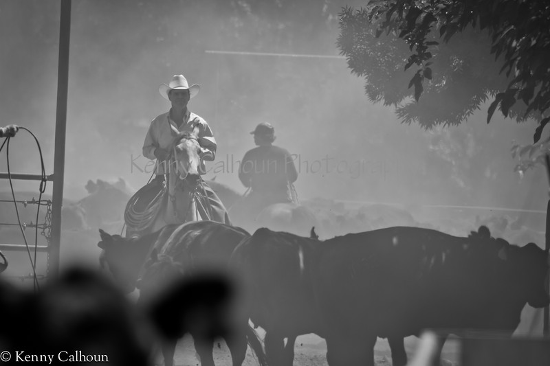 Yolo_Land_&_Cattle_May_20,_2012_(13_of_65)