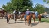 5-22 Yolo Land & Cattle_N5A1735