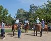 5-22 Yolo Land & Cattle_N5A1738