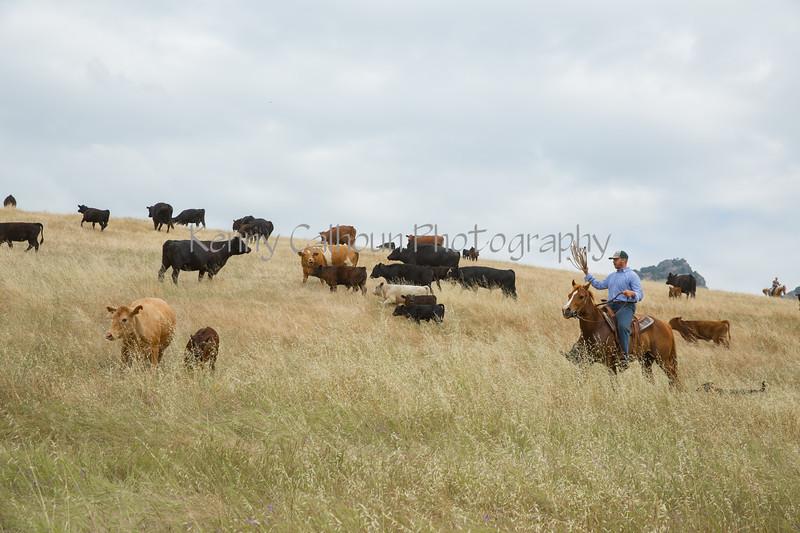 5-25-19 Smith Ranch-3589