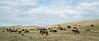 5-25-19 Smith Ranch-3536