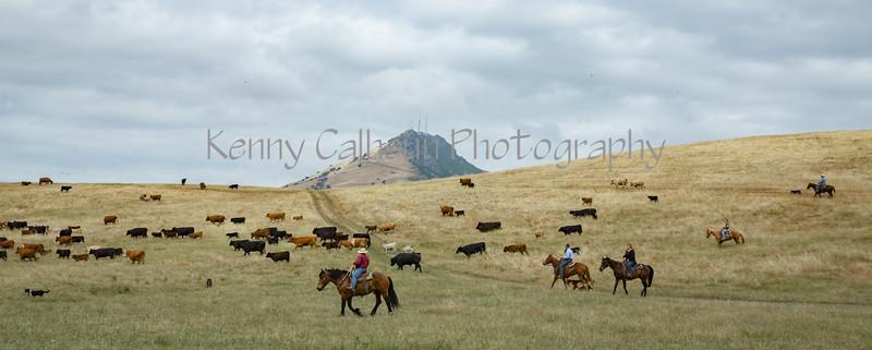 5-25-19 Smith Ranch-3548