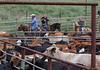 5-25-19 Smith Ranch-8933