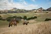5-25-19 Smith Ranch-2952