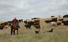 5-25-19 Smith Ranch-3601
