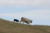 5-25-19 Smith Ranch-8216