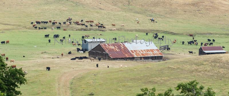 5-25-19 Smith Ranch-8324