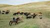 5-25-19 Smith Ranch-3477