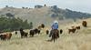 5-25-19 Smith Ranch-8621