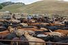 5-25-19 Smith Ranch-3819