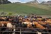5-25-19 Smith Ranch-3899