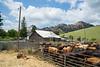 5-25-19 Smith Ranch-3925
