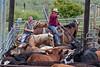 5-25-19 Smith Ranch-9022