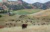5-25-19 Smith Ranch-3619