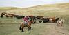 5-25-19 Smith Ranch-3459