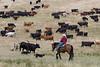 5-25-19 Smith Ranch-8648