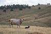 5-25-19 Smith Ranch-2841