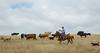 5-25-19 Smith Ranch-3610