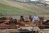 5-25-19 Smith Ranch-3850