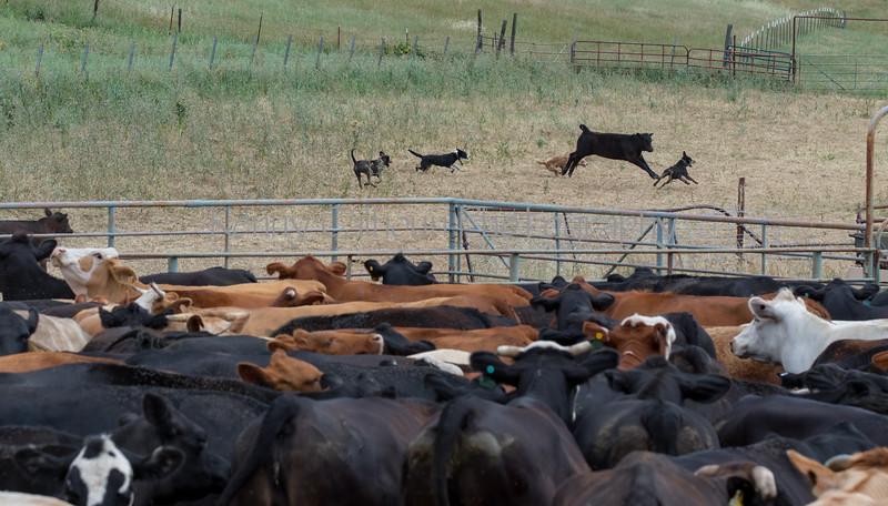 5-25-19 Smith Ranch-8902