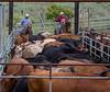 5-25-19 Smith Ranch-8965