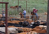 5-25-19 Smith Ranch-8924
