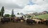 5-25-19 Smith Ranch-3888