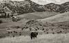 5-25-19 Smith Ranch--9