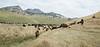 5-25-19 Smith Ranch-3693
