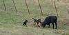 5-25-19 Smith Ranch-8614