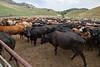5-25-19 Smith Ranch-3791