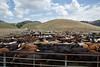 5-25-19 Smith Ranch-3815