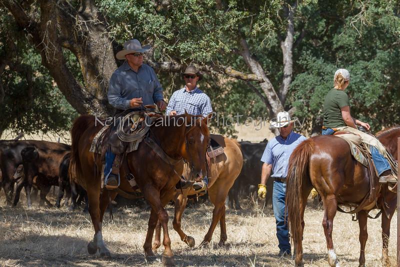 May 27 2015 Yolo Land & CattleIMG_6479