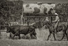 May 27 2015 Yolo Land & CattleIMG_6403-Edit-Edit