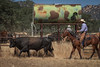 May 27 2015 Yolo Land & CattleIMG_6403-Edit
