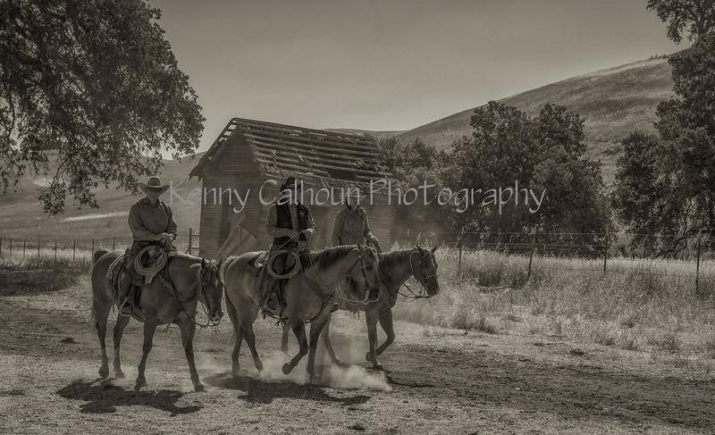 May 27 2015 Yolo Land & Cattle_N5A3510-Edit-Edit
