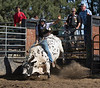 6-25 Steinmetz Bucking Stock951A3267
